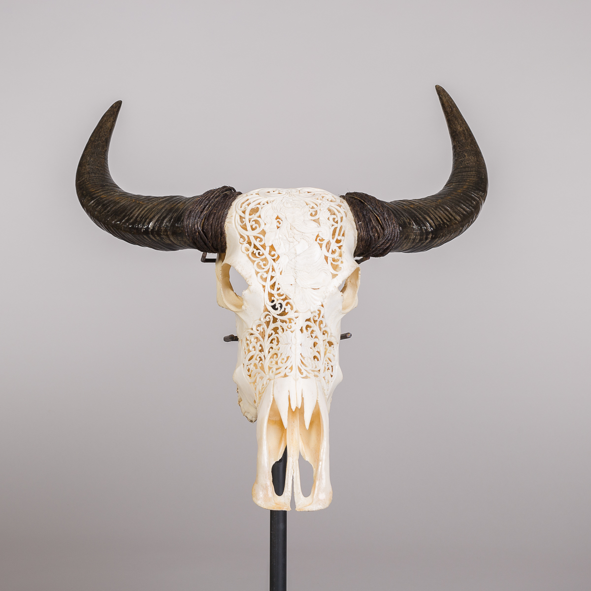 Bøffel hode - Naturfarvet-174