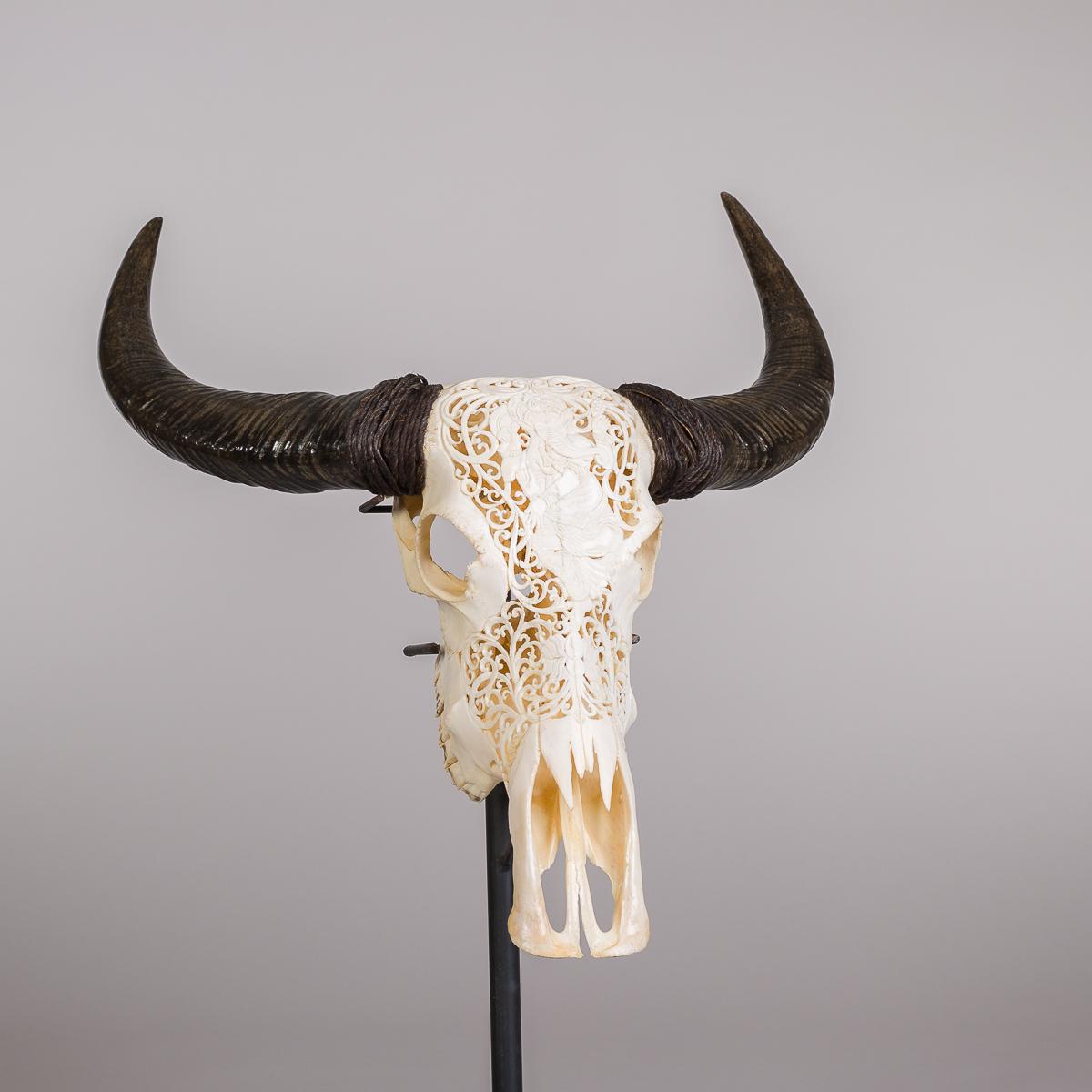 Bøffel hode - Naturfarvet-0